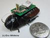 Photo: Cockroach Cyborg