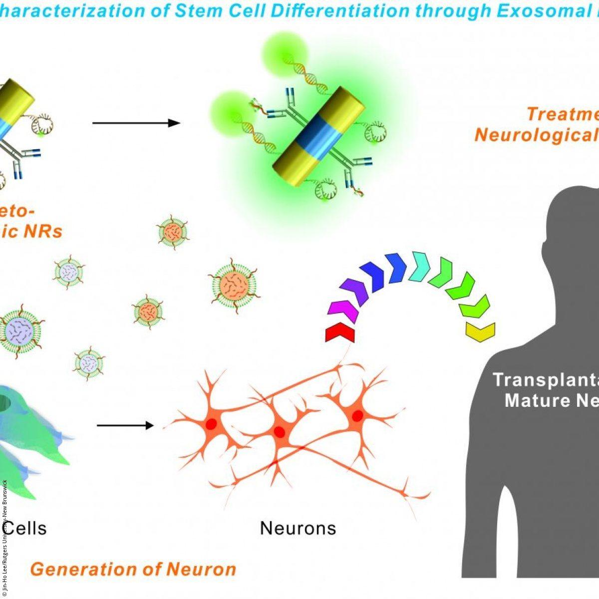 Nanotechnology: better stem cell transplantation research