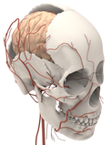 Virtual Anatomy Simulator – Head & Neck: Virtual head&neck anatomy