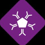 IgG, Antikörper