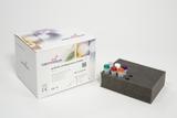 qCOVID Respiratory COMBO 2 GB210916 0049